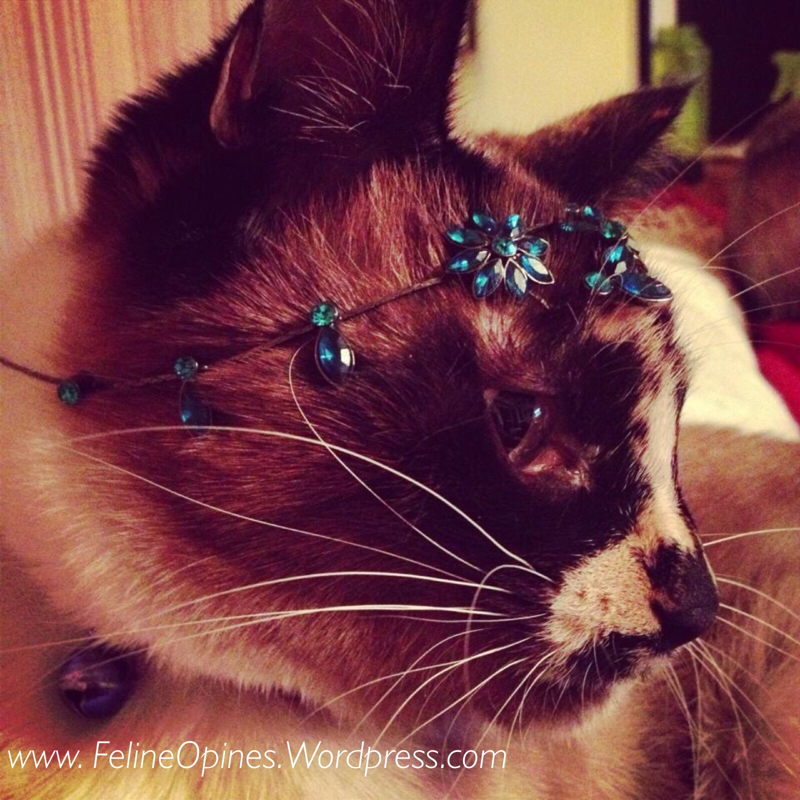 cat with jewelry