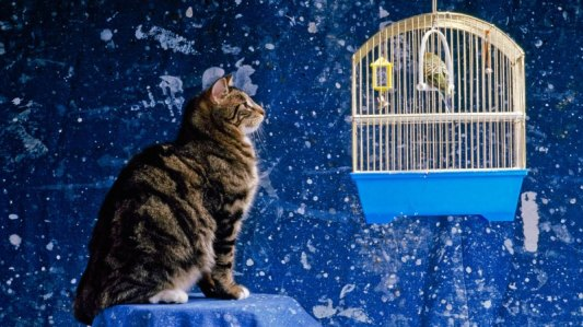 cat and parakeet