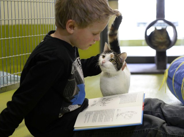 child reads to shelter cat