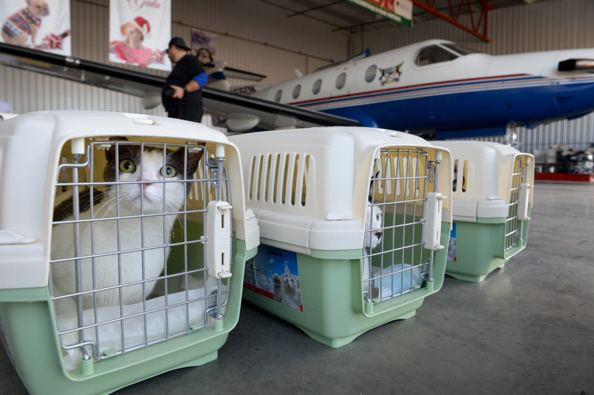 shelter cats flown from California to Washington to be adopted