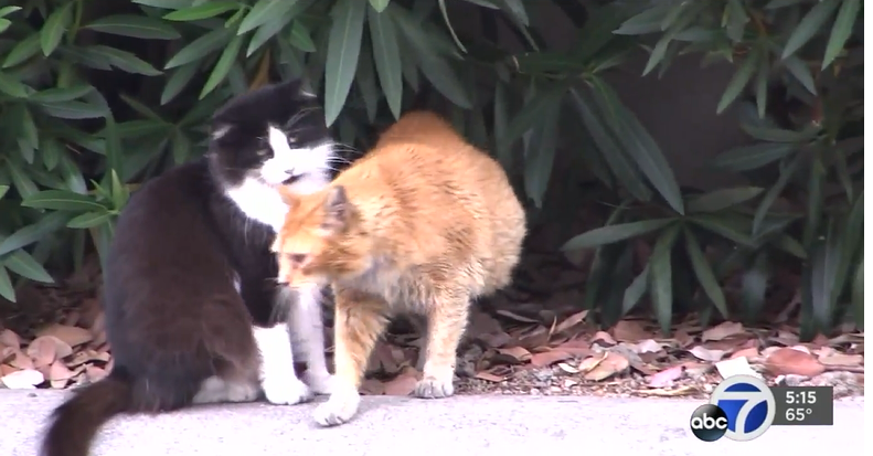cat garden gets feral cats adopted