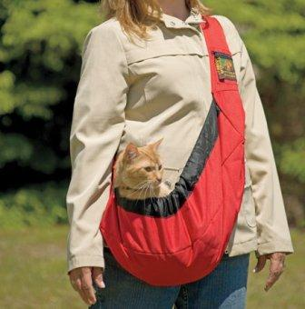 orange tabby in a slilng carrier