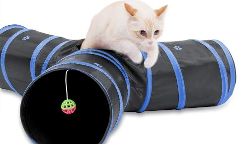 siamese cat with cat tunnel