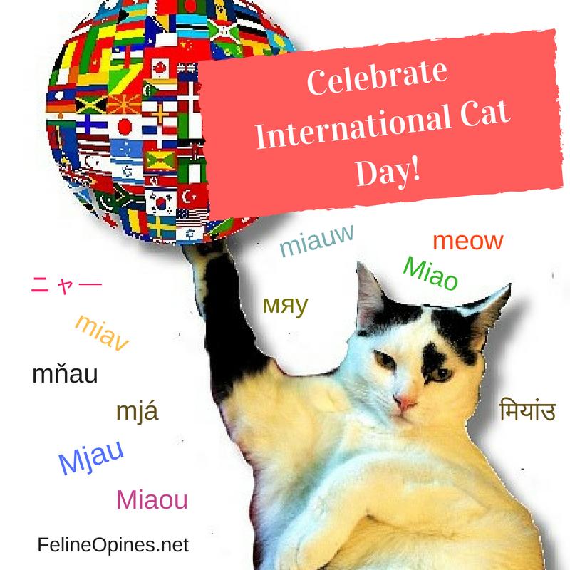 black and white cat celebrates international cat day