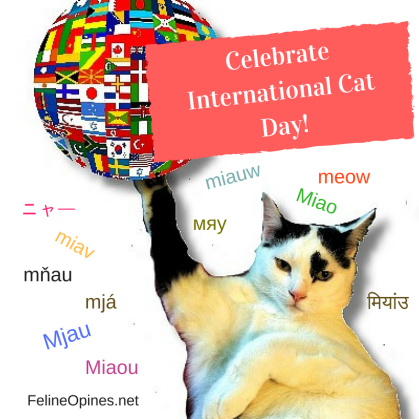 black and white cat celebrates international cat day