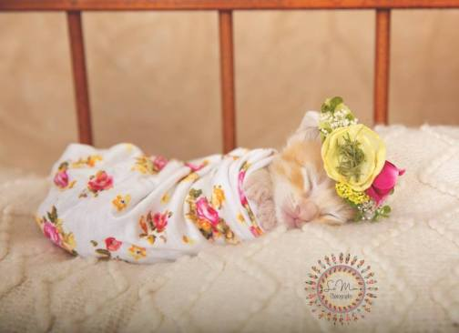 Ginger kitten in baby picture