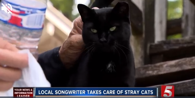 Nashville musician feeds stray black cat