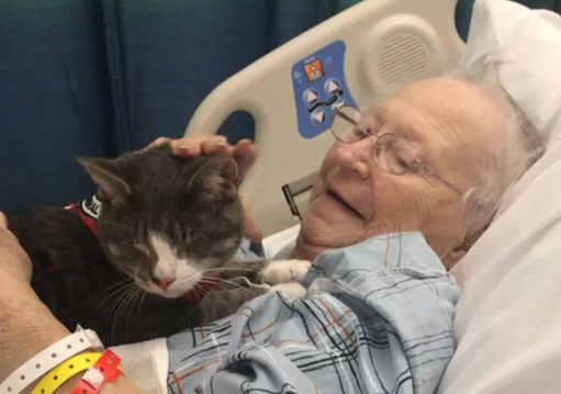 Donny the blind therapy cat