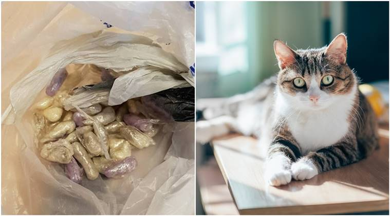 cat-finds-drugs_759_getty