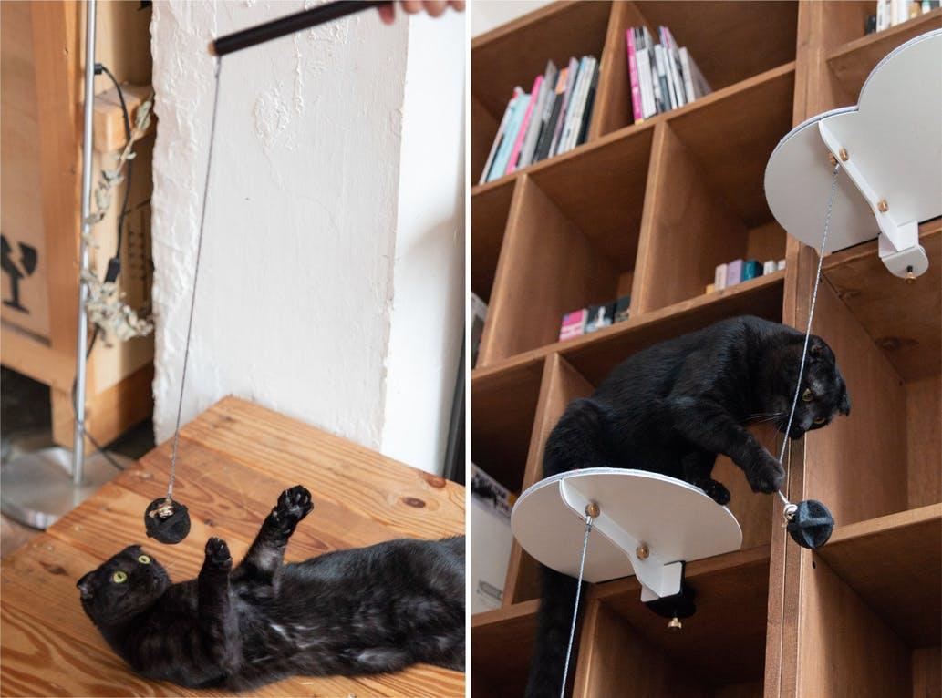 black cat on cat furniture