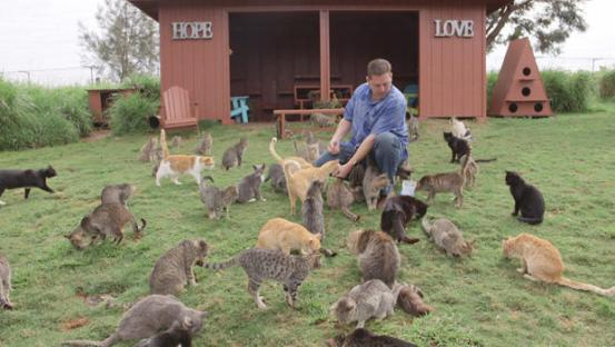hawaiian cat sanctuary