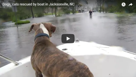saving pets in hurricane Florence
