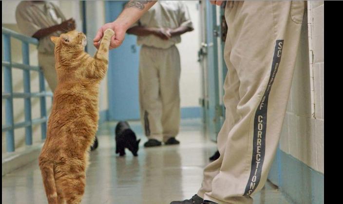 prisoner and cat
