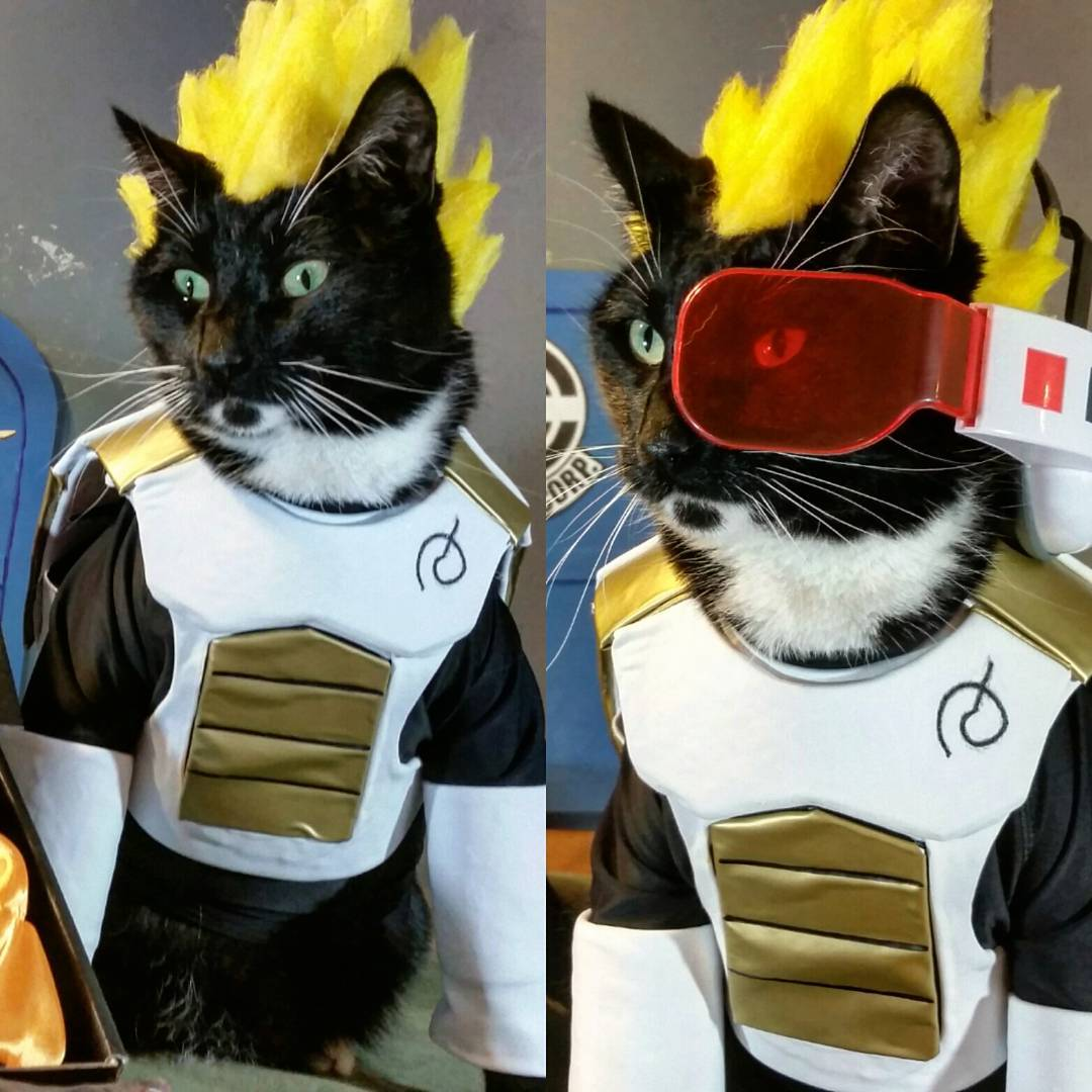 cosplay black and white cat