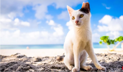 black and white cat on the beach