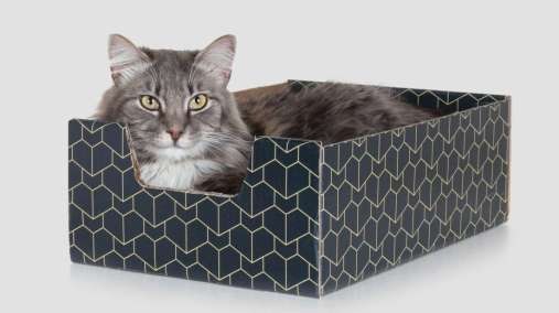 Tabby Cat in fancy cardboard box
