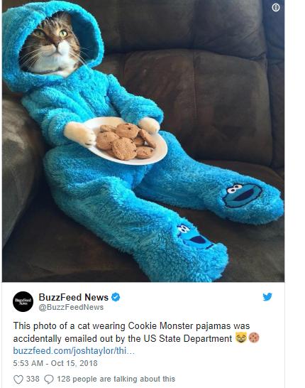 cat in onesie