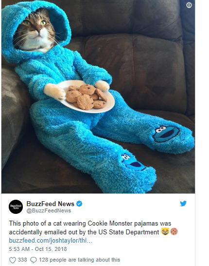 cat in onesie