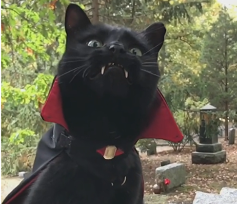 Black cat with long fangs