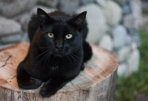 Black cat om wood stump