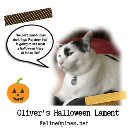black and white cat complains about Halloween