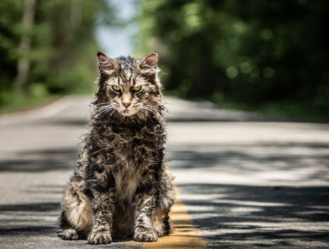 tabby cat actor in pet sematary