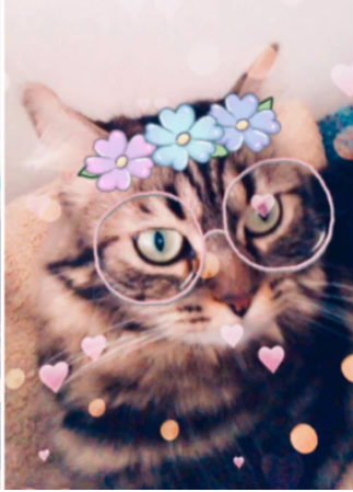 snapchat cat face feature