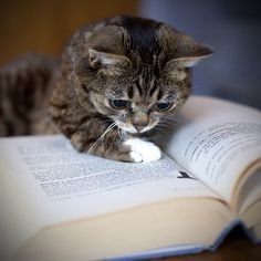 little cat on a book