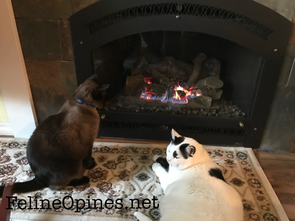 Siamese cat and black and white cat in front of the fire