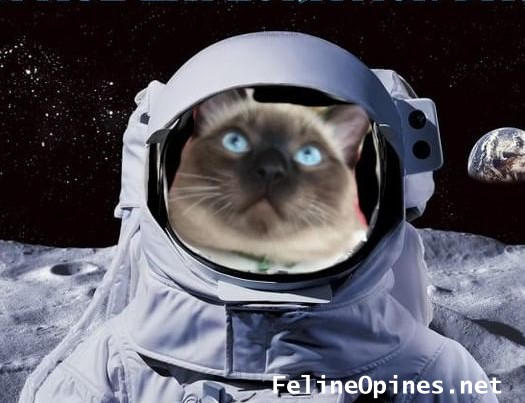 siamese cat in spacesuit