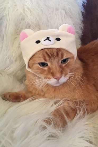 orange tabby in urban outfitters cat hat