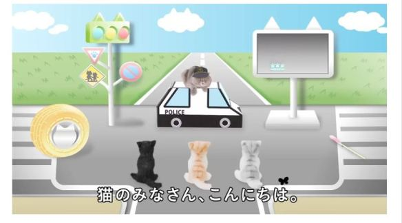 CatSafetyVideo