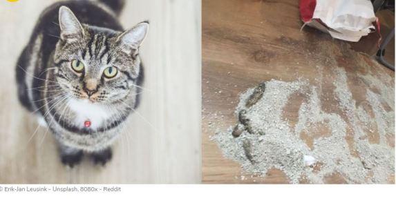 catPoop