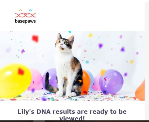 LilyBasePaws