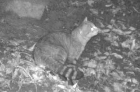 CatFox_2