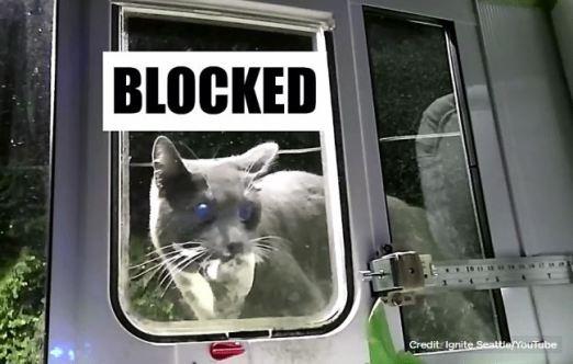 shelter cats | Feline Opines