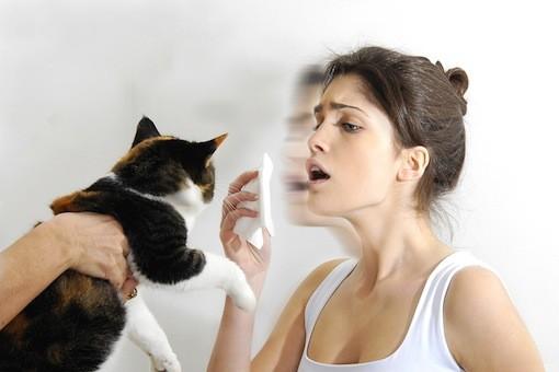 cat-allergies